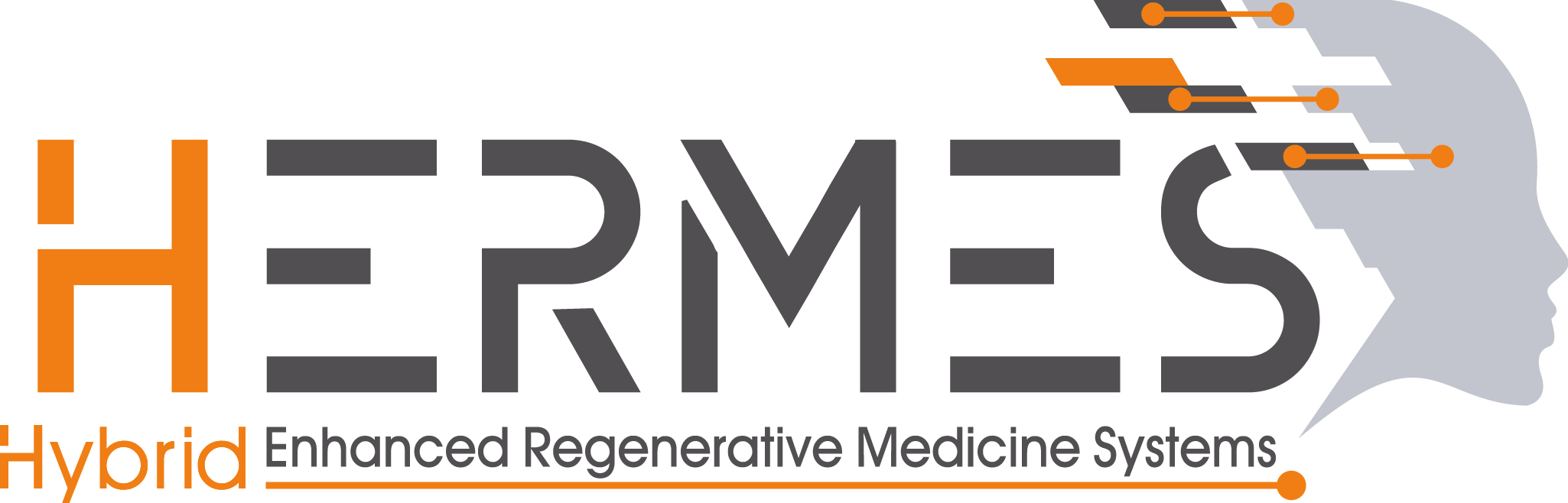 HERMES project, our involvement in regenerative medicine | Grupo de